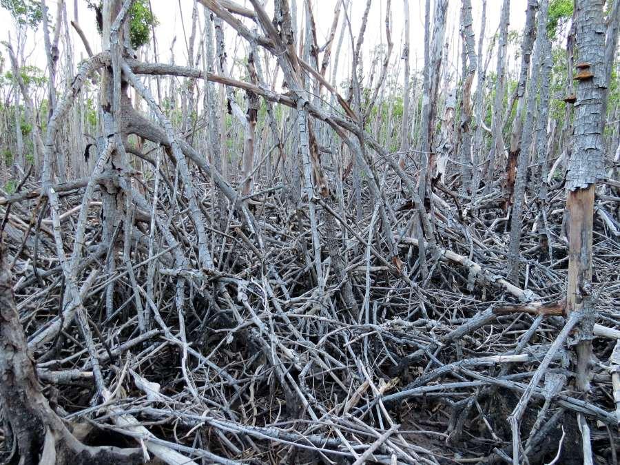 Queensland Coast Legacy Of Cyclone Yasi