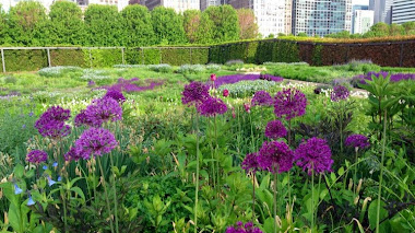 Lurie Garden A Decade of Seasons