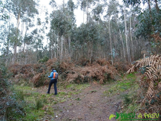 Alto la Corona o Pico La Ablanosa: Entrando en el bosque del Alto de la Corona