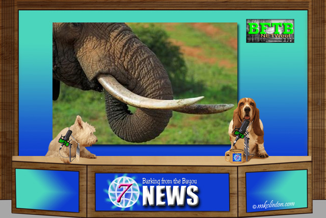 BFTB NETWoof News reports on ivory ban in China