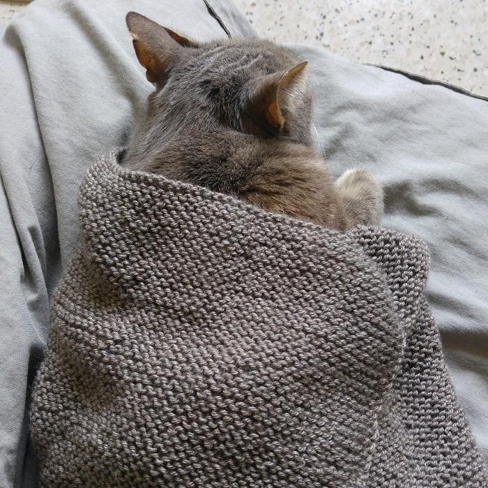 Couverture pour chat en laine au point mousse par Hello c'est Marine