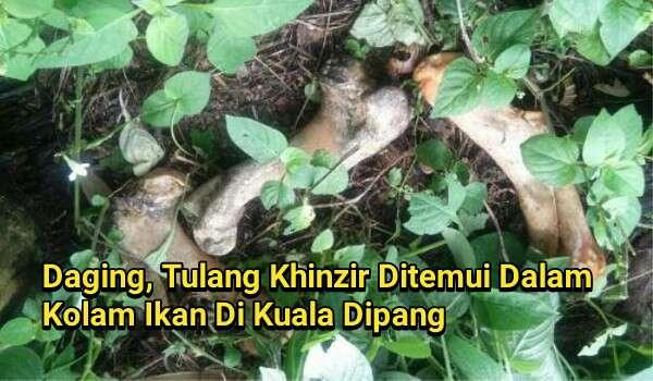 Daging, Tulang Khinzir Ditemui Dalam Kolam Ikan Di Kuala Dipang