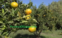 Logo Vinci gratis una cassetta di Agrumi Biologici Siciliani