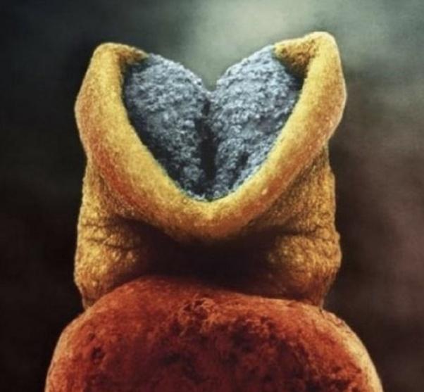 phôi thai hình thành chất xám