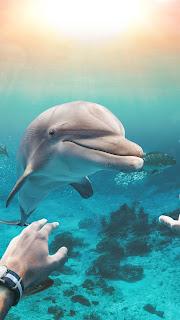 Underwater Fish HD Wallpaper