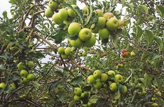 Hasil gambar untuk wisata petik apel malang