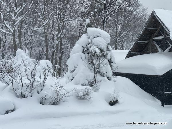 snow monster outside Hotel Jogakura in Amori, Japan