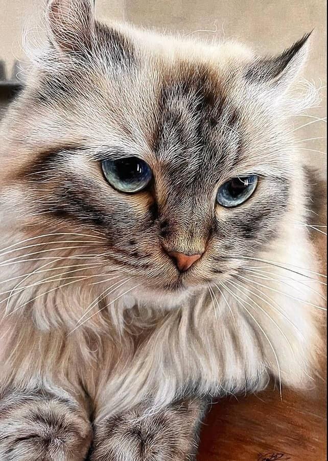 01-Cat-beautiful-fur-Haruki-Kudo-www-designstack-co