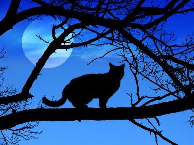 Resultado de imagem para gato preto no telhado