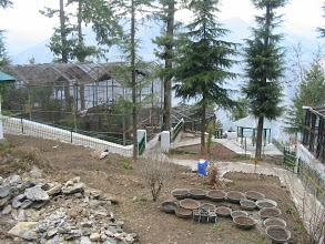 BIRD PARK, Shimla