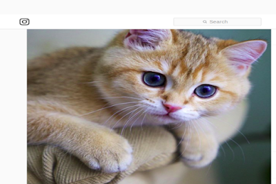 Screenshot_2019-10-09_Hosico_Cat_on_Inst
