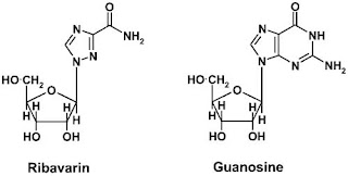 Comparison of the structures of ribavirin