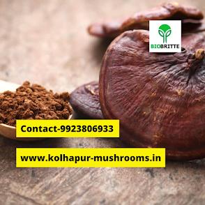 Ganoderma mushroom information in Hindi