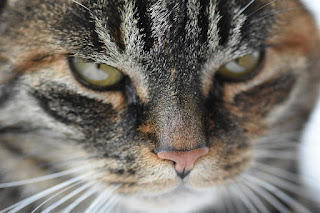 Arthritis treatments for cats now include tramadol