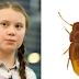 Besouro recebe nome em homenagem a Greta Thunberg