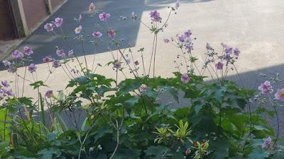 fleurs-sauvages-vue-fenetre-cour-garage