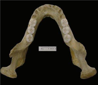 Η κάτω γνάθος του Montmaurin-La Niche αποκαλύπτει την πολυπλοκότητα της προέλευσης των Νεάντερταλ