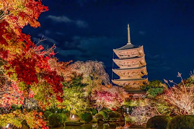 京都,紅葉,ライトアップ