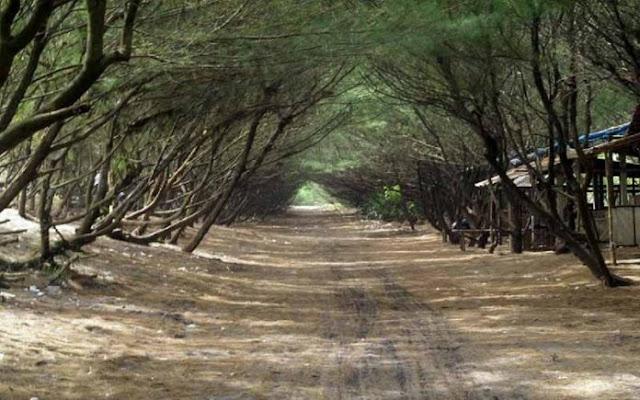 Tempat wisata Pantai Goa Cemara Bantul Yogyakarta | paket wisata | harga tiket | alamat