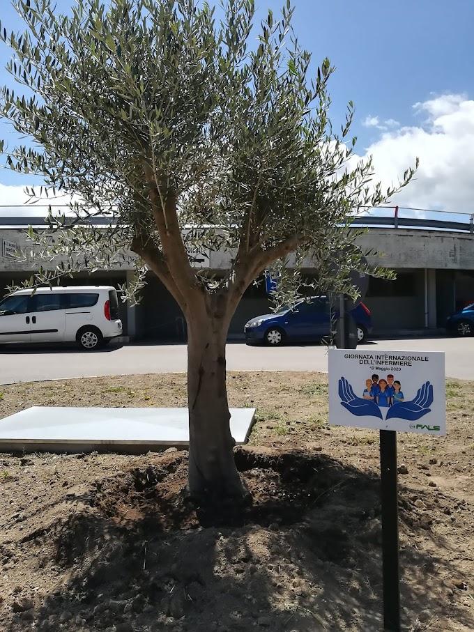 Giornata dell'infermiere: la FIALS di Rionero in Vulture dona una pianta di ulivo