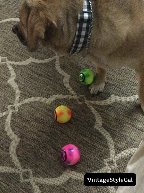 Dog playing with 3 balls