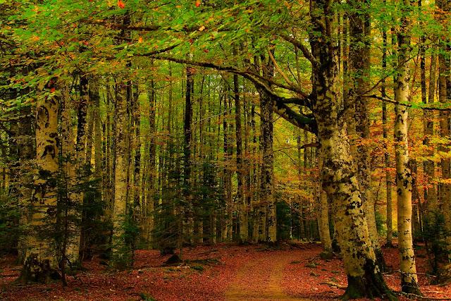 Bosque de Bryn