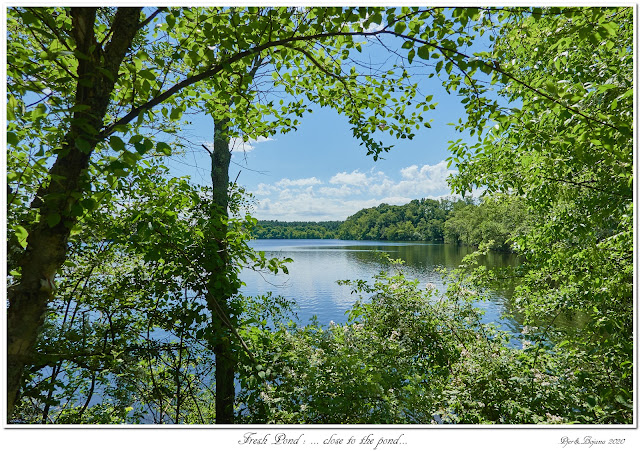 Fresh Pond: ... close to the pond...