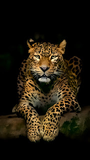 Serious Leopard 3D Spots Mobile HD Wallpaper