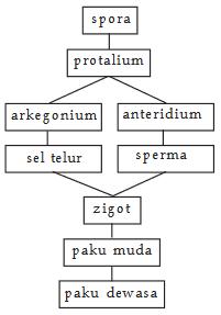 Klasifikasi Kingdom Monera : klasifikasi, kingdom, monera, Pengelompokan, Makhluk, Hidup, Berdasarkan, Kingdom, (Monera,, Protista,, Fungi,, Plantae,, Animal)