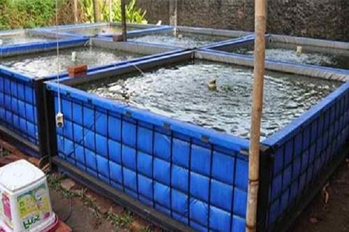 Cara Budidaya Ikan Nila Dengan Kolam Terpal