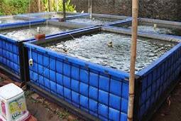 Begini Cara Budidaya Ikan Nila Dengan Kolam Terpal