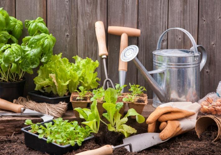 Crear un huerto urbano paso a paso