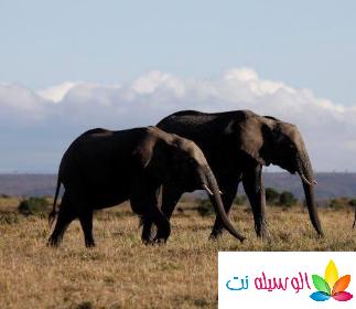 اجمل الحيوانات في كينيا