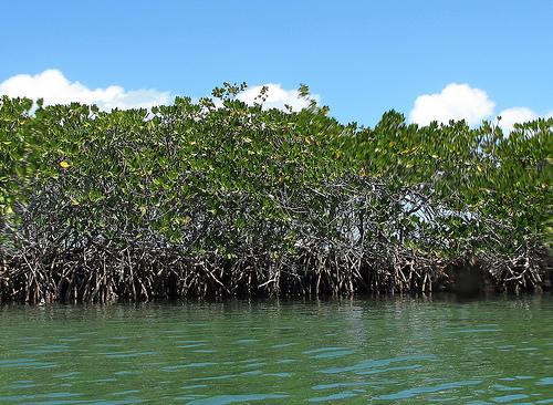 Hutan Mangrove – Labuhan Maringgai, Lampung Timur
