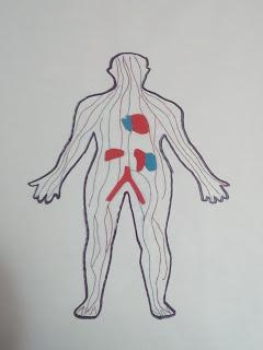 maquetas del sistema respiratorio faciles, imagenes de maquetas del sistema circulatorio