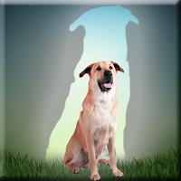 G2J Chinook Dog Escape