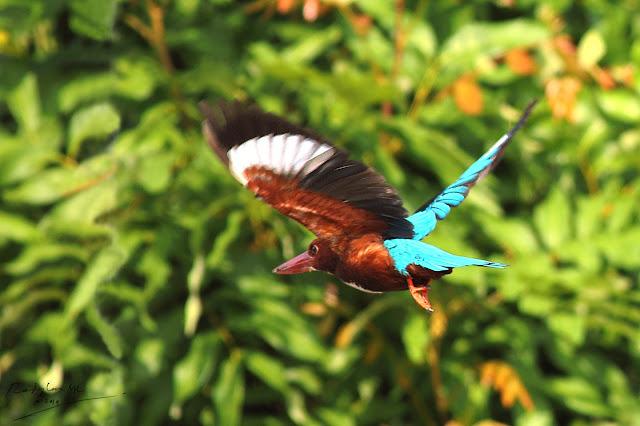 Kingfisher flew off
