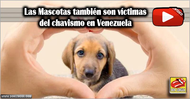 Las Mascotas también son víctimas del chavismo en Venezuela