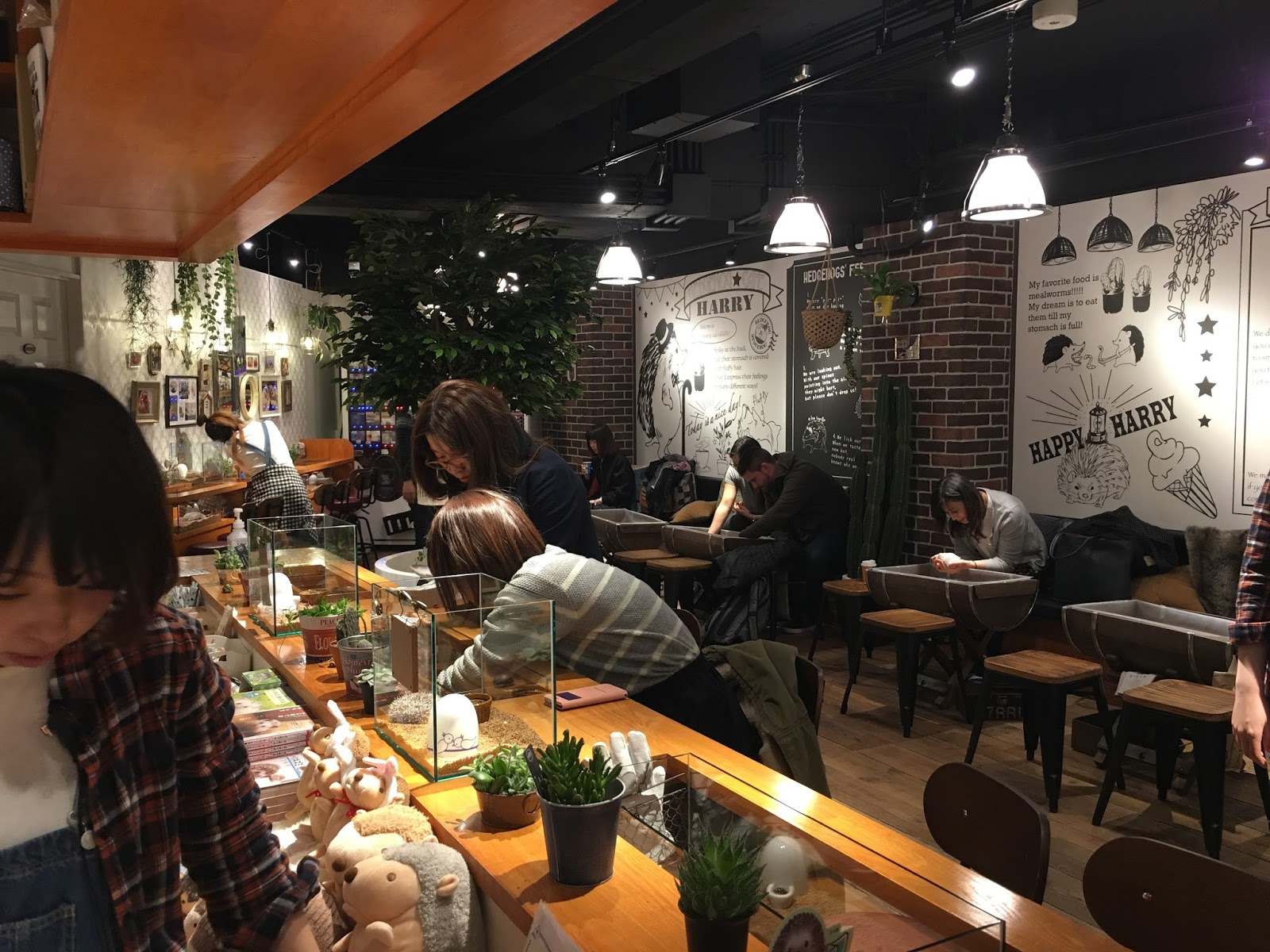 Cucina Amorosa Warehouse Import Taste Of Hawaii Hedgehog Cafe Tokyo Japan