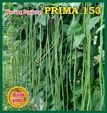 Benih Kacang Panjang PRIMA 153