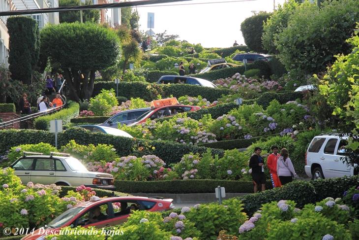 Descubriendo hojas uno no se cansa de ver jardines en san for Jardin japones hagiwara de san francisco