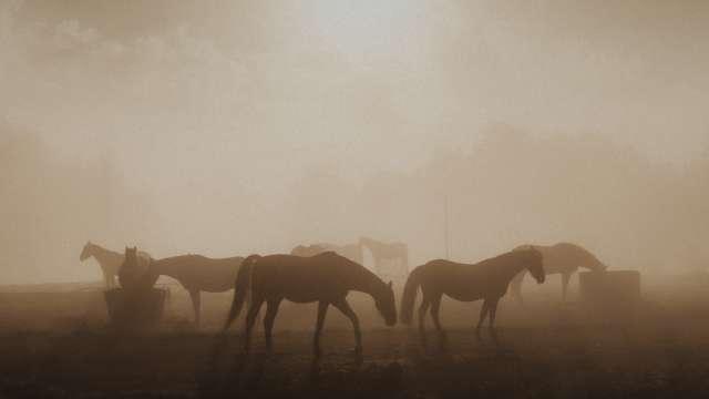Perang Burhan : Foto oleh Janko Ferlic dari Pexels