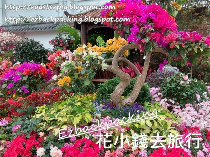 香港花展2021九龍公園