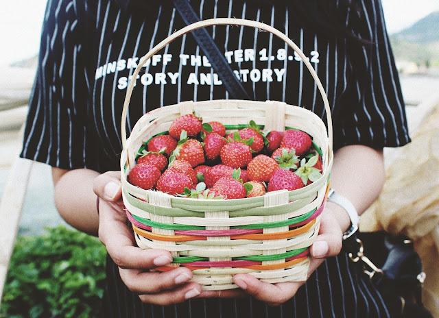 salud transgénicos alimentación