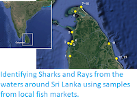 https://sciencythoughts.blogspot.com/2019/05/identifying-sharks-and-rays-from-waters.html