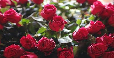 تفسير رؤية ورد أحمر في المنام، ورد أبيض في الحلم، الورد الأصفر في المنام