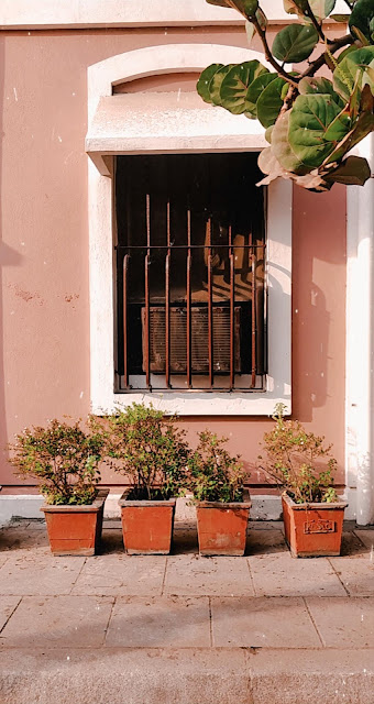 Pondicherry-travel-weekend-getaway-style prism-blog-street photography-pink wall-plants-window