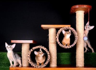 Ganswed Cat Vilage, Rumah Para  Kucing Yang Comel dan Cantik