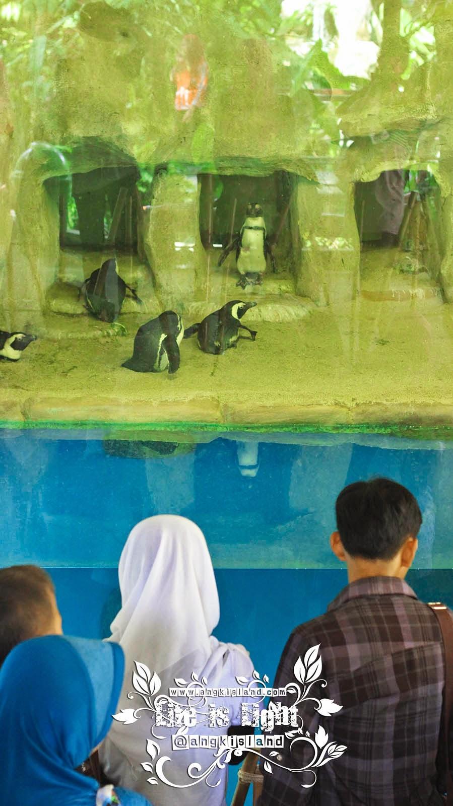 pinguin imut Gembiraloka