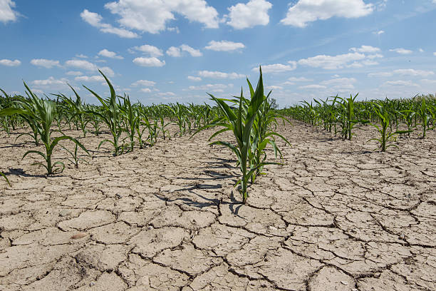 11 technologies to eliminate food and or water shortage